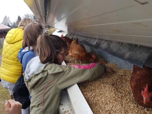 Mobiler Dienst Sehen auf der Ziegenalm - Füttern der Hühner